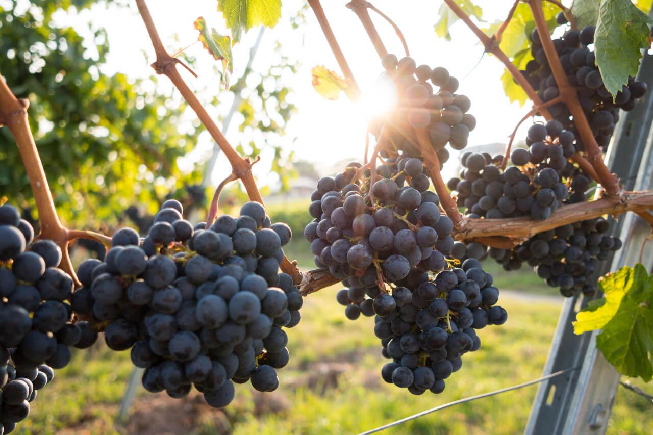 Servicios clientes uva agrotécnicos hellín agrotecnicoshellin.es